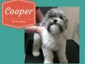 Cooper (1)