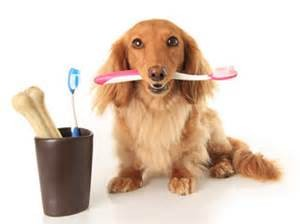 dog w toothbrush