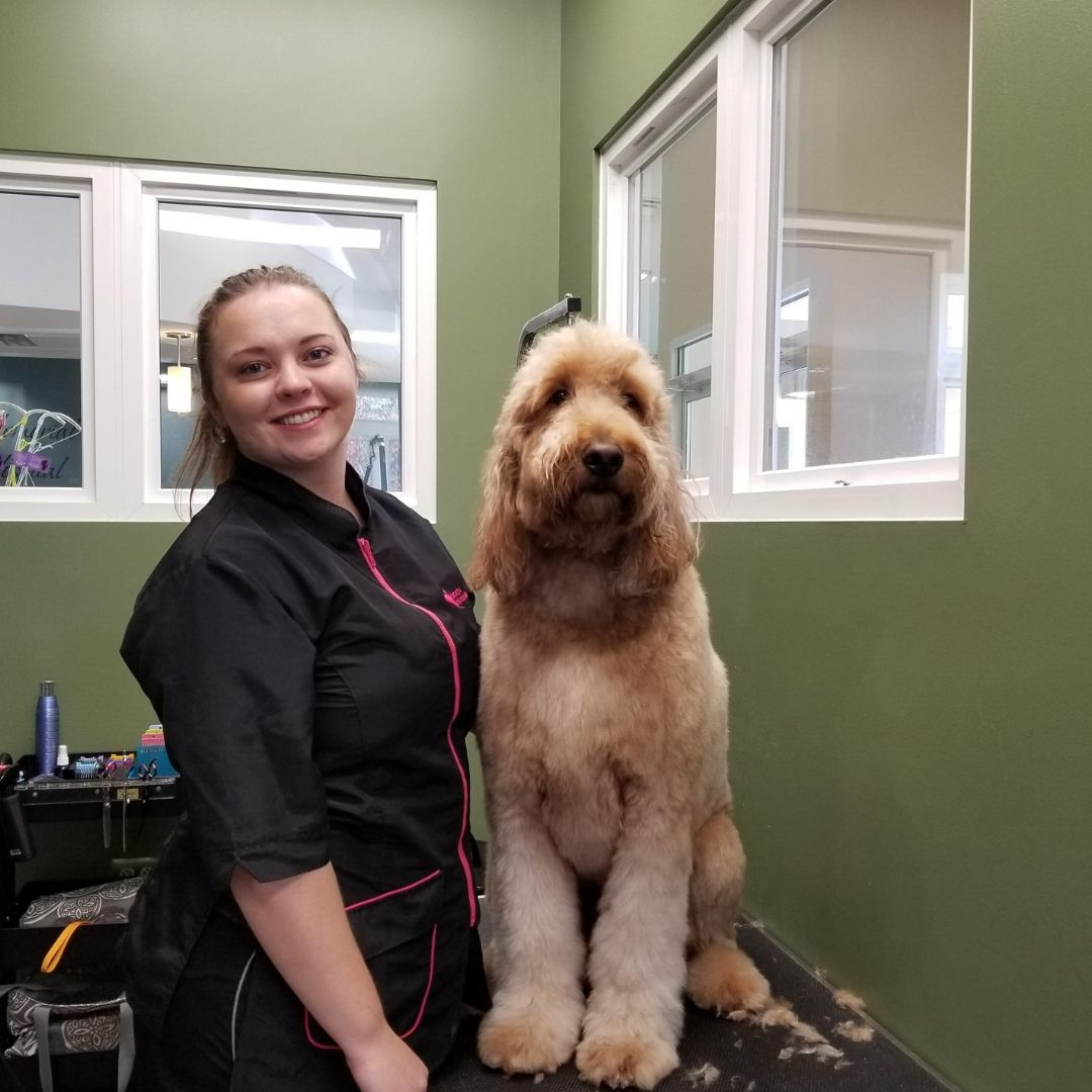 Meet our Groomers